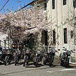 ハンバーガー ツーリング&桜